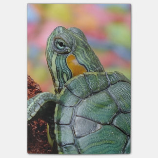 Red-eared slider turtle sticky notes