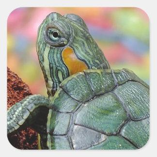 Red-eared slider turtle square sticker