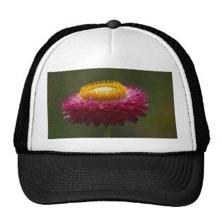 Red Everlasting Flower Cap