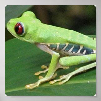 Red Eye Green Tree Frog Print