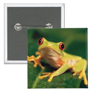 Red eye tree frog 15 cm square badge