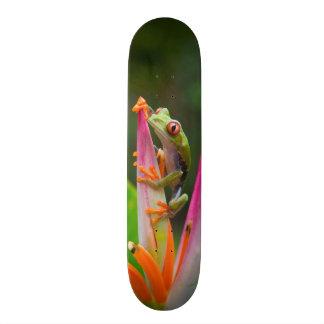 Red-eye tree frog, Costa Rica 2 21.3 Cm Mini Skateboard Deck