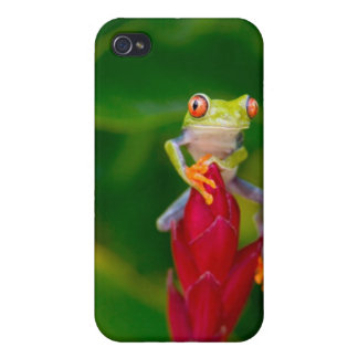Red-eye tree frog, Costa Rica iPhone 4 Covers