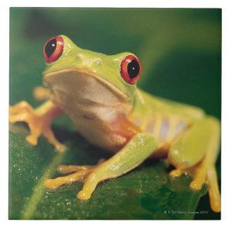 Red eye tree frog large square tile