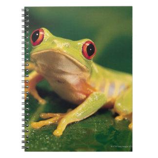 Red eye tree frog notebook