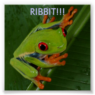 Red-Eye-Tree-Frog, RIBBIT!!! Poster