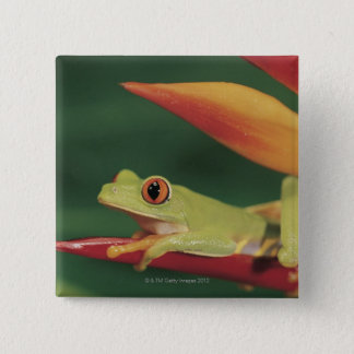 Red eye tree frog sitting on flower 15 cm square badge