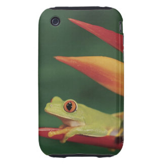 Red eye tree frog sitting on flower iPhone 3 tough cover