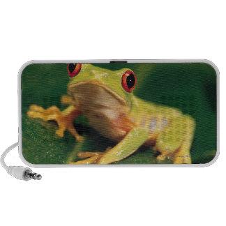 Red eye tree frog speakers