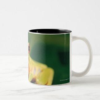 Red eye tree frog Two-Tone coffee mug
