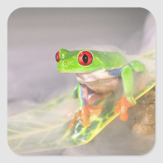 Red Eye Treefrog in the mist, Agalychinis Square Sticker