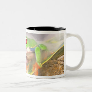 Red Eye Treefrog in the mist, Agalychinis Two-Tone Mug