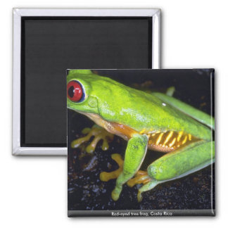 Red-eyed tree frog, Costa Rica Magnet