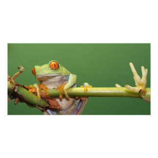 red eyed tree frog personalized photo card