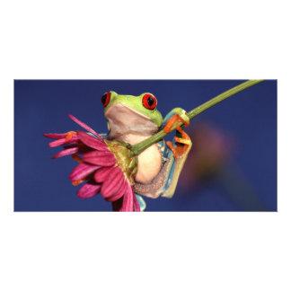 red eyed tree frog customized photo card