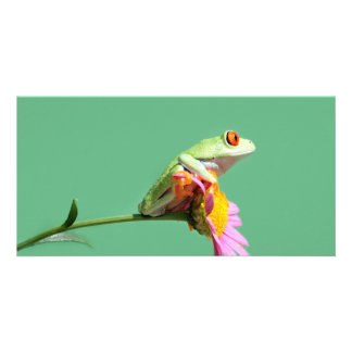 red eyed tree frog photo card