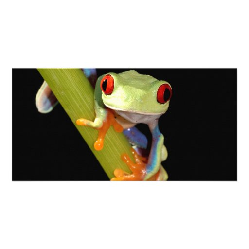 red eyed tree frog photo cards