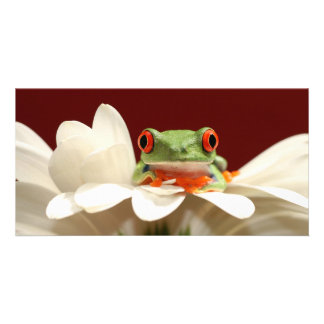 red eyed tree frog photo greeting card