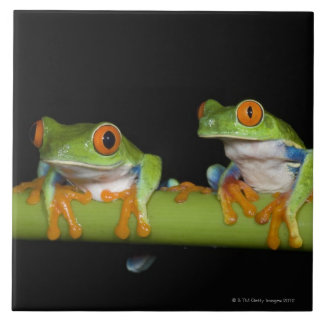 Red-eyed Tree Frogs (Agalychnis callidryas) Large Square Tile