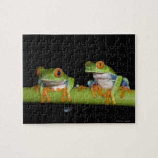 Red-eyed Tree Frogs (Agalychnis callidryas) Puzzle