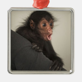 Red-faced Spider Monkey Ateles paniscus) Silver-Colored Square Decoration
