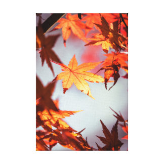 Red Fall Autumn Leaves Maple Tree Canvas Print
