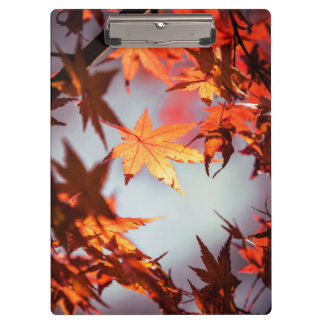 Red Fall Autumn Leaves Maple Tree Clipboard