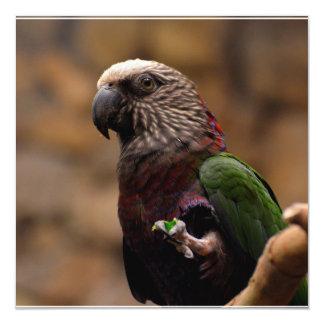 Red Fan Parrot Custom Announcements