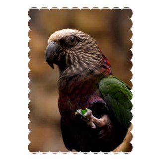 Red Fan Parrot 13 Cm X 18 Cm Invitation Card