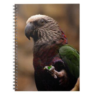 Red Fan Parrot Note Books