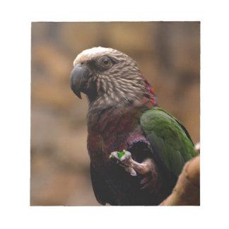 Red Fan Parrot Memo Pads