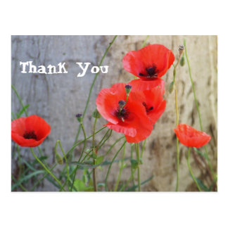 Red Field Corn Poppies Thank You Postcard