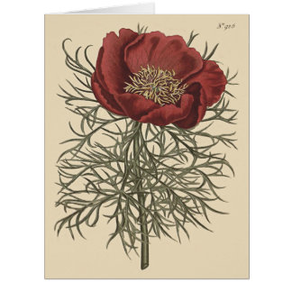 Red Fine Leaved Peony Botanical Illustration Card