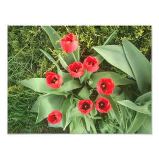 Red Floral Photo Print