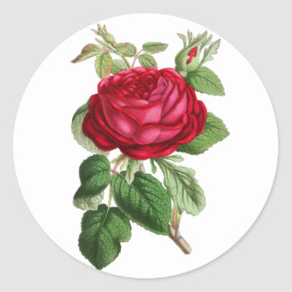 Red Floral Vintage Rose Classic Round Sticker
