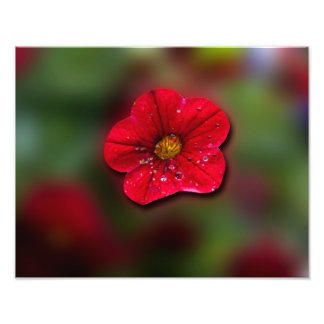 Red Flower Blur Photographic Print