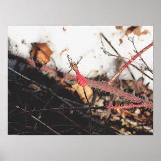 Red Flower Bud Poster
