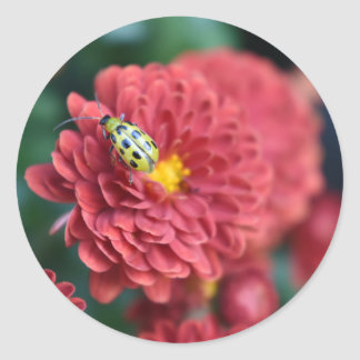 Red Flower Nature Photography Beetle Insect Bug Classic Round Sticker