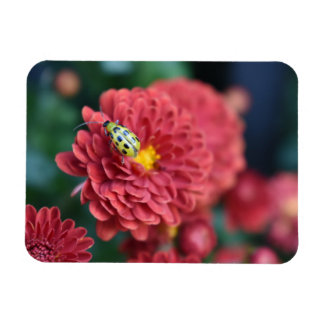 Red Flower Nature Photography Beetle Insect Bug Magnet