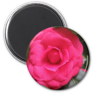 Red flower of Camellia japonica Rachele Odero Magnet