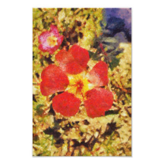 Red flower painting photo
