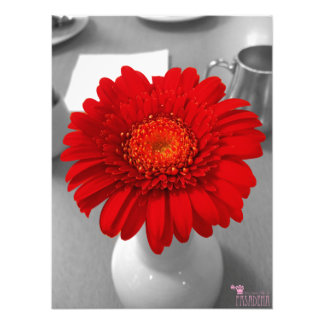 Red Flower Photo Color Splash Photo
