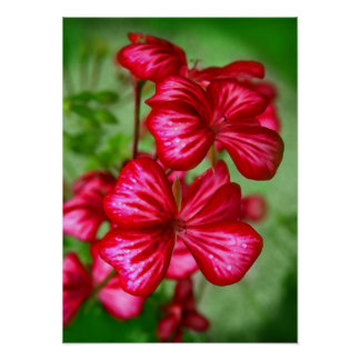 red flowers on green poster