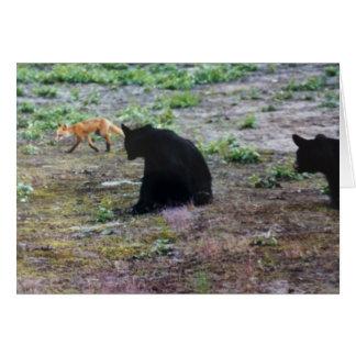 Red Fox and Black Bears in Alaska Card