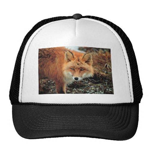 Red Fox at Cape Newenham Mesh Hat
