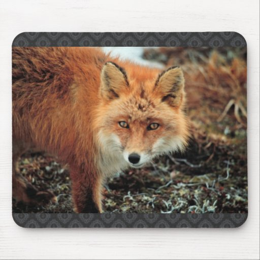 Red Fox at Cape Newenham Mousepads