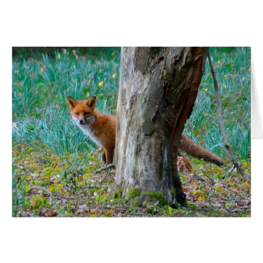 Red fox blank greeting card