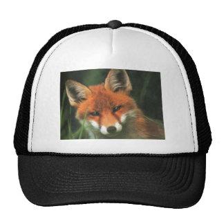 Red Fox Hats