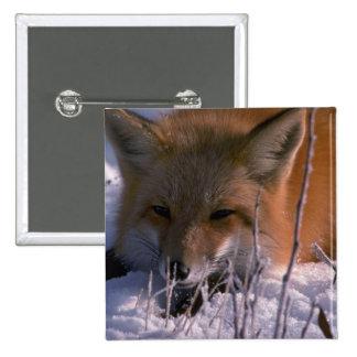 Red Fox head shot Buttons