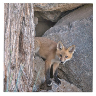 Red Fox Kit Tile
